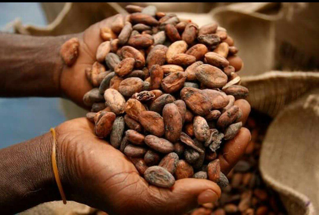 Le Cameroun va octroyer  50 milliards de FCFA au financement des filières cacao-café sur une durée de 5 ans